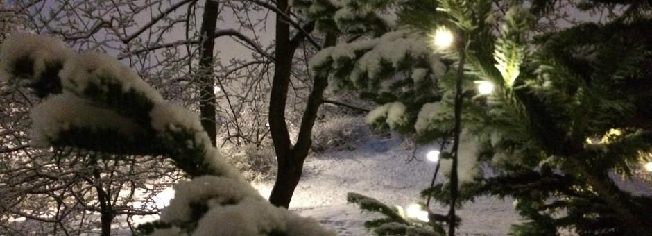 vinterbild_granljus_bakgrund